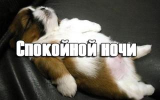 Прикольные пожелания спокойной ночи девушке: сообщения, картинки