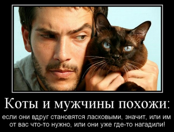 Мужчины и коты
