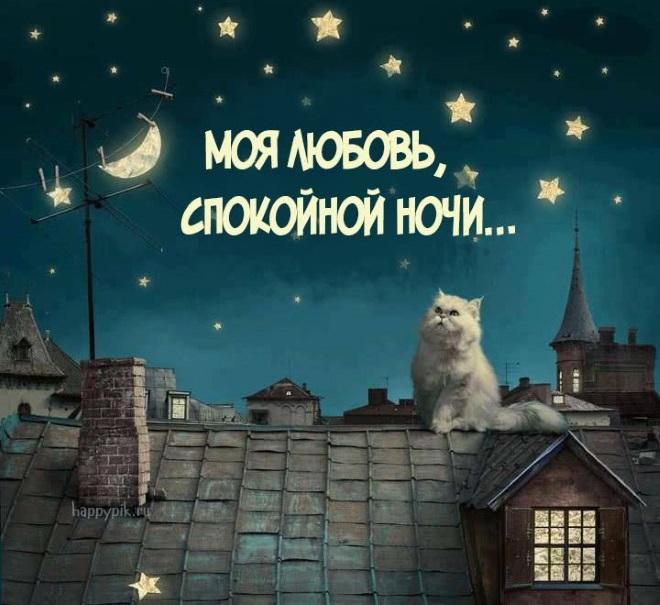 Кот на крыше ночью