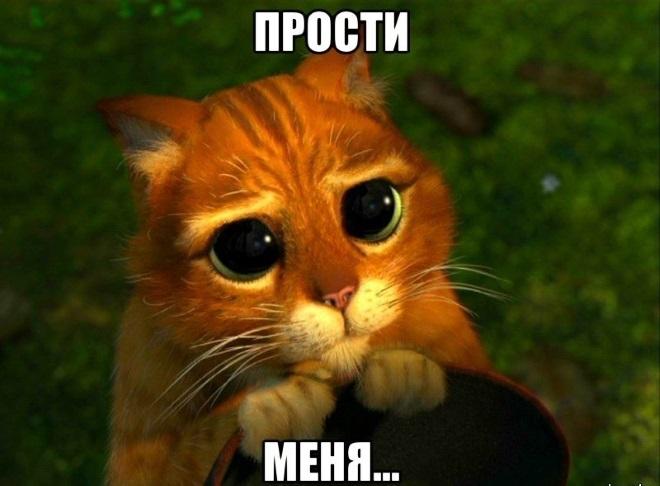 Котик просит прощения 1