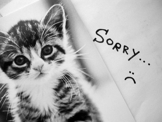 Котенок просит прощения 1