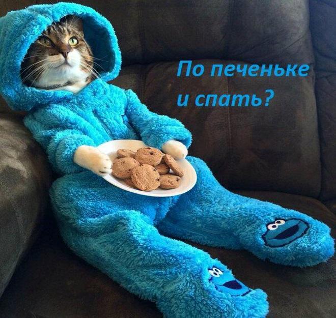 Кот в комбинезоне