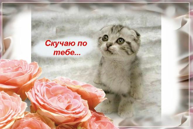 Прости с котиком